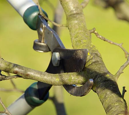 Abattage et élagage d'arbres près de Mons, Charleroi et Maubeuge