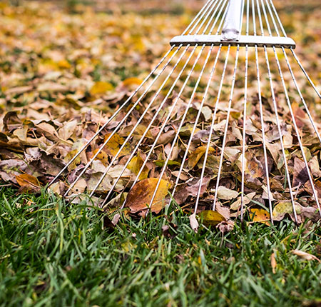 Ramassage de feuilles mortes près de Mons, Charleroi et Maubeuge